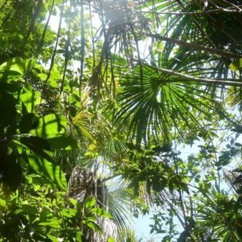 Ökologischer Geldanlage - Wald von Forest Finance