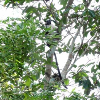Geld wächst auf Bäumen, wenn man in ökologischen Mischwald in Panama investiert. https://www.forestfinance.de/?partner_id=1182