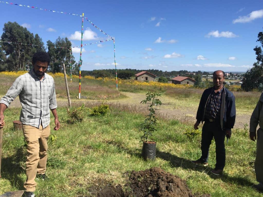 Neue Bäume in Äthiopien.https://kerstinhack.de